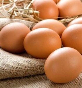 Яйца деревенские куриные