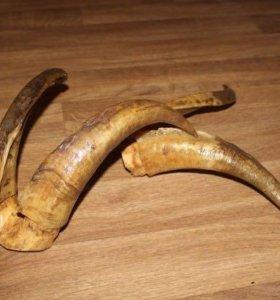 Продам рога козла и козы - декор