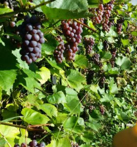 Уход за садом, озеленение, консультации агронома