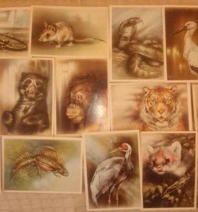 Открытки 1990 года с животными