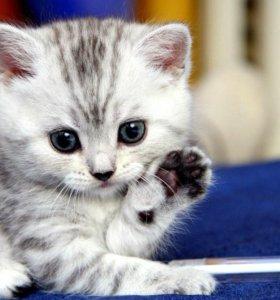 """Передержка для кошек """"Как дома"""""""""""""""