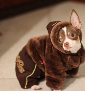 Шубка-комбинезон для собачки-мальчика
