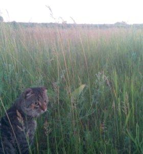Вязка кот ищет кошечку