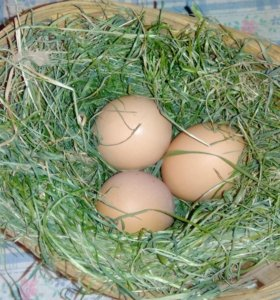 Яйцо, мясо бройлера