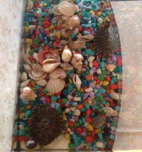 Продам аквариум с двумя черепашками🐢🐢