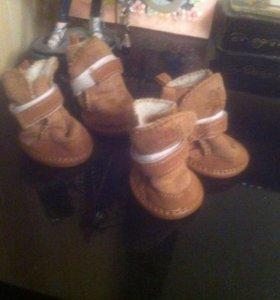 Зимняя обувь (для собачки)