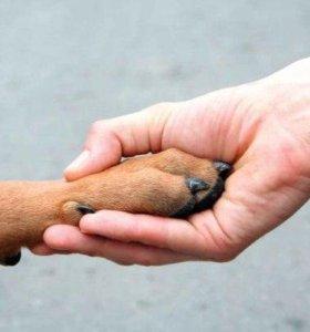 Дрессировка собак /передержка животных