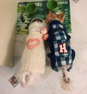 Комбинезон для собачки (справа)