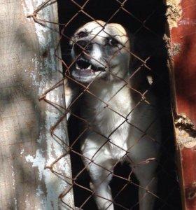Осторожно злая собака #15
