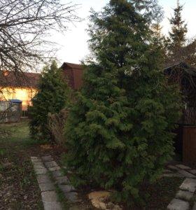 Участок 12 соток в черте Солнечногорска с домом