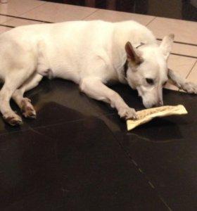 Добрейший пёс ищет дом!!!собака