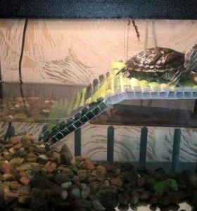 Продам морскую черепаху