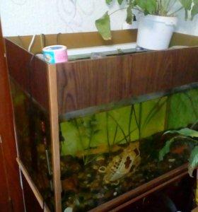 Аквариум с рыбами,фильтр,нагреватель воды