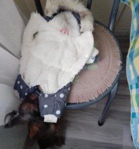 Куртка на маленькую собачку