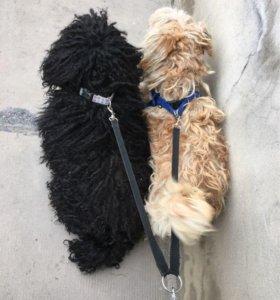 Сворка на 2 собак
