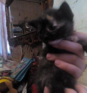 Бесплатный котенок девочка