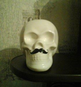 Капилка види черепа