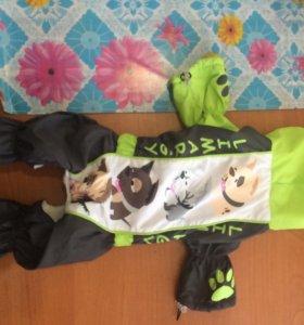 Одежда для собаки (девочки)