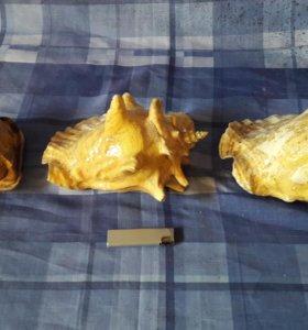 Раковины морские