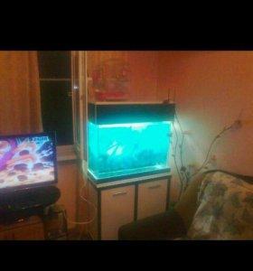 Продам аквариум 150литров с тумбой.