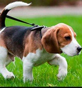 Прогулка с вашей собакой