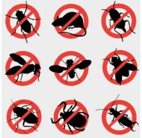 Уничтожение насекомых, грызунов.
