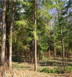 Участок в коттеджном поселке Пушкинский Лес