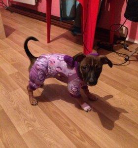 Куртка для собаки 🐶