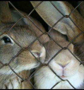 Продаются кролики!!!! А также мясо кролика!!!