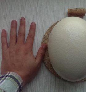 Скорлупа страусинного яйца