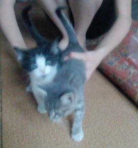 Котята 4 мальчика и 2 девочки.