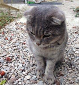 Породистый кот