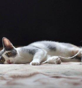 Кошка Маргошка