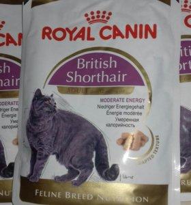 ROYAL CANIN влажный корм для кошек.