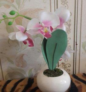 Сувенир орхидея