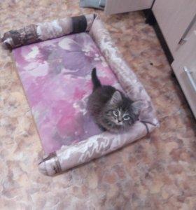 Шью кошачьи и собачьи лежанки,диванчики