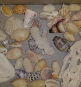 Ракушки и кораллы