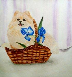 Картина акварель \Шпиц \ кролик \цветы \вишня