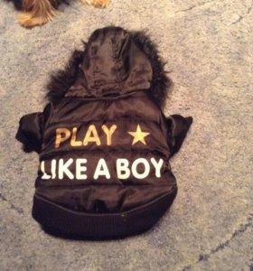Куртка и ботинки для собак мелких пород