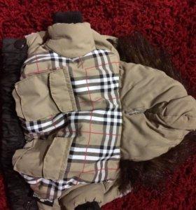 Куртка для мини Йоркширского терьера