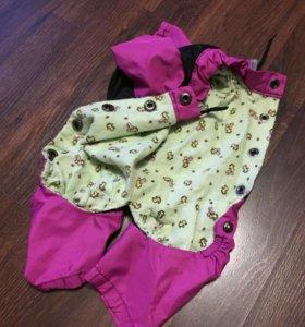 Одежда для  mini собаки
