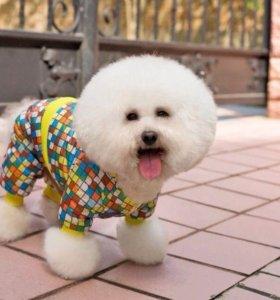 Зимняя одежда для собак мини пород