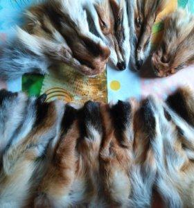 7 Лапок,4 мордочки и 4 хвоста лисы