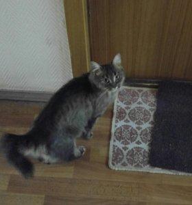 Красивая кошечка ищет дом!