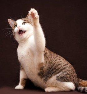 Кошечка Сильва ищет дом