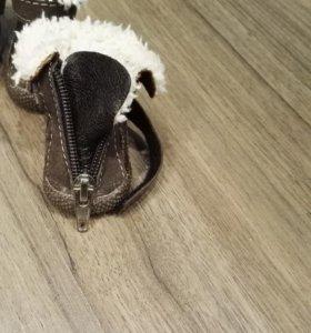 одежда - обувь для собак