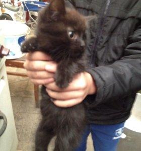Котёнок два месяца