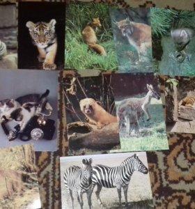 28 открыток с животными и птицами (СССР)