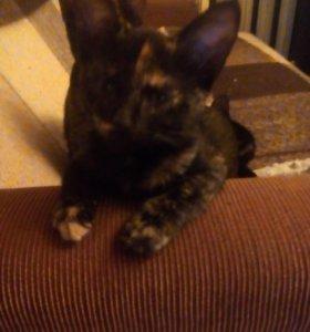 Кошечка в добрые руки, 8 месяцев.