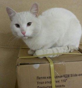 Потеряный кот